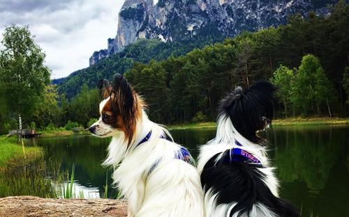 seiser-alm-marketing-6-dogs-in-the-alps-10