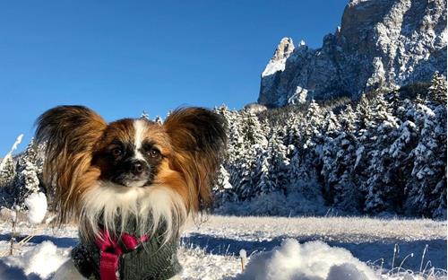 seiser-alm-marketing-6-dogs-in-the-alps-22