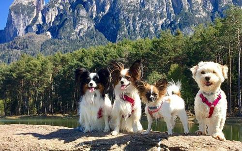 seiser-alm-marketing-6-dogs-in-the-alps-5