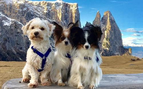 seiser-alm-marketing-6-dogs-in-the-alps-6