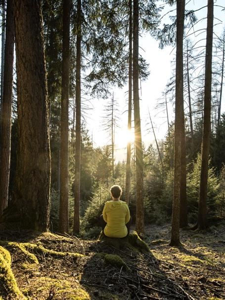 Forest bathing, oxygenation and relaxation in the Seiser Alm holiday area