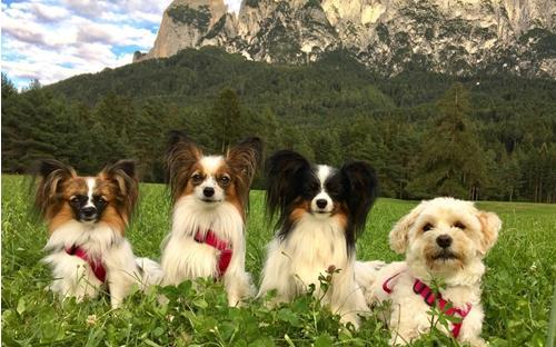 seiser-alm-marketing-6-dogs-in-the-alps-13